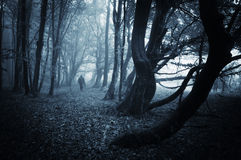 走在有蓝色雾的一个黑暗的森林里的一个鬼的人的黑暗的场面 免版税图库摄影