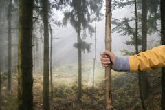 走在有远足的棍子森林里 免版税库存图片