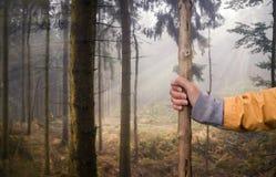 走在有远足的棍子森林里 免版税库存照片