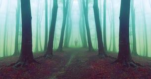 走在有雾的可怕森林里的人 免版税图库摄影