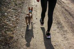 走在有basenji狗的一个森林里的年轻女人 库存图片