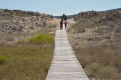 走在木板走道的人们往海海滩 库存图片