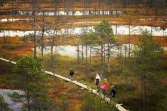 走在木板走道的人们在Lahemaa国家公园在爱沙尼亚 库存照片