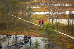 走在木板走道的人们在Lahemaa国家公园在爱沙尼亚 免版税库存图片