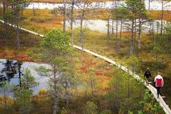 走在木板走道的人们在Lahemaa国家公园,爱沙尼亚 库存图片