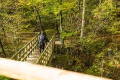 走在木桥的旅客在森林里 库存照片