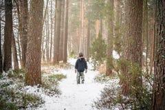 走在杉树森林里的孤立男孩 免版税库存照片