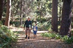 走在树中的父亲和儿子在森林里 库存图片