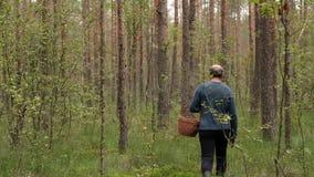 走在树之间和收集蘑菇的白种人成熟mushroomer 股票视频
