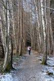 走在桦树森林里在冬天 免版税库存照片