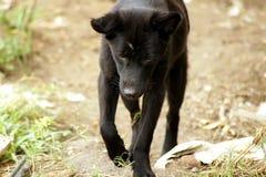 走在森林森林的哀伤的狗 免版税库存照片