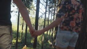 走在森林的爱恋的夫妇在晴天期间 股票视频