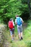 走在森林道路的远足者夫妇  库存图片