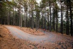 走在森林里的人在秋天 免版税库存图片