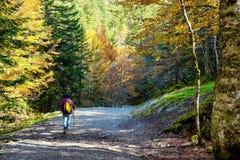走在森林里的妇女远足者在秋天 库存图片
