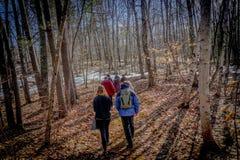 走在森林里的小徒步旅行者小组在冬天 免版税库存照片