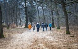 走在森林里的成人人民 库存图片
