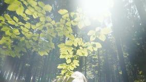 走在森林里的白种人妇女背面图 股票录像