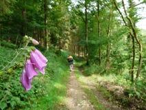 走在森林里 免版税库存图片