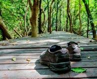 走在森林 免版税图库摄影