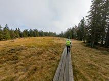 走在横跨沼泽的一条木木板走道的女性徒步旅行者 库存照片
