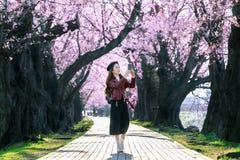走在樱花庭院里的年轻女人在一个春日 行樱花树在京都,日本 免版税库存图片