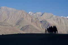 走在沙丘的骆驼下午 图库摄影