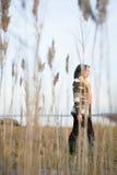 走在沼泽地的成熟妇女 免版税库存照片