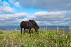 走在海岸线附近的马 库存照片