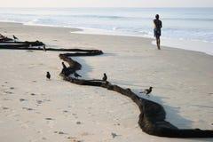 走在海滩的印地安人 库存图片