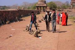 走在灰色叶猴中的Ranthambore堡垒附近的当地人民 库存图片