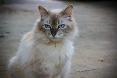 走在狂放的自然的有来历猫 免版税图库摄影