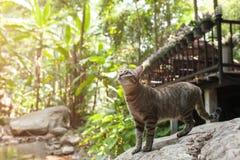 走在石头的猫的侧视图在河附近 免版税库存照片