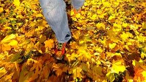 走在秋叶的人 慢的行动 股票视频