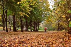 走在秋天木头 免版税库存照片