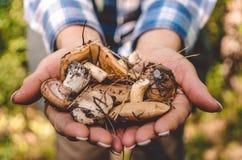 走在秋天森林收集的秋天森林蘑菇 库存照片