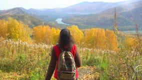 走在秋天森林里的妇女游人在晴朗的秋天天 徒步旅行者hikking在山,享用的旅客妇女全景 股票视频