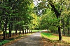 走在秋天森林里 库存图片