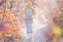 走在秋季森林道路的早晨薄雾和远足者 图库摄影