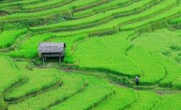 走在米领域的妇女在Mu Cang柴,越南 免版税库存图片