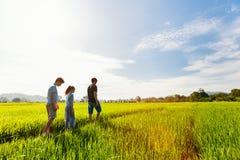 走在米领域的家庭 免版税库存照片