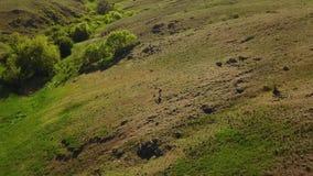 走在绿草的美丽如画的谷的人空中录影往河 跟踪背包徒步旅行者的射击寄生虫 影视素材