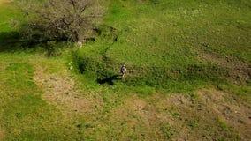 走在绿草的美丽如画的谷的人空中录影往河 跟踪背包徒步旅行者的射击寄生虫 股票视频
