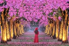 走在美丽的桃红色花树行的年轻女人  免版税库存图片