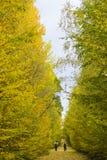 走在美丽的浪漫胡同的人们在有五颜六色的树的一个公园 免版税库存图片