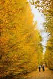 走在美丽的胡同的人们在有五颜六色的树和阳光的一个公园 库存图片