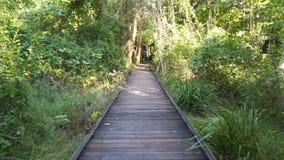 走在美洲红树木板走道在海角希尔斯伯勒角国家公园,澳大利亚 股票视频