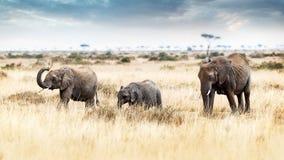 走在肯尼亚非洲的三头大象 库存图片