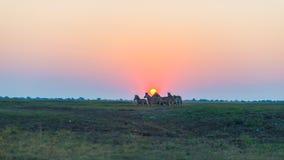 走在背后照明的灌木的斑马牧群在日落 在天际的风景五颜六色的阳光 在非洲人的野生生物徒步旅行队 免版税库存照片