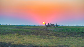 走在背后照明的灌木的斑马牧群在日落 在天际的风景五颜六色的阳光 在非洲人的野生生物徒步旅行队 库存照片